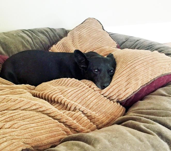 Big Dog Bed